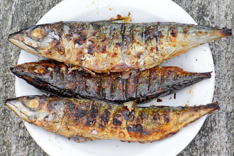 Tres pescados foto de archivo libre de regalías