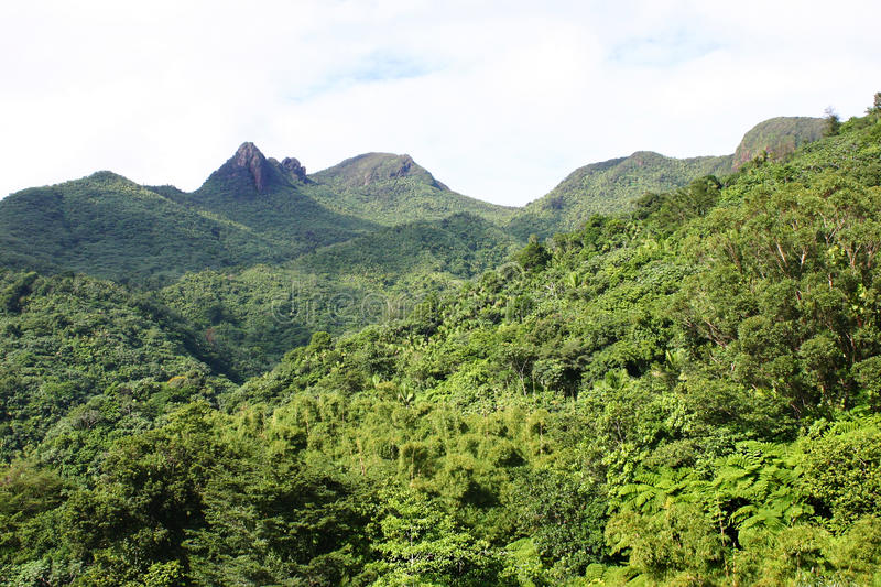 Tres Picachos at El Yunque National Forest royalty free stock photo