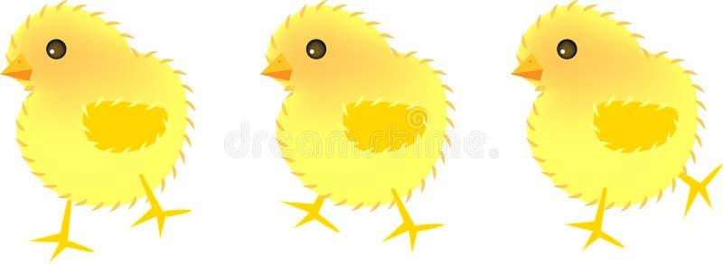 Tres polluelos stock de ilustración
