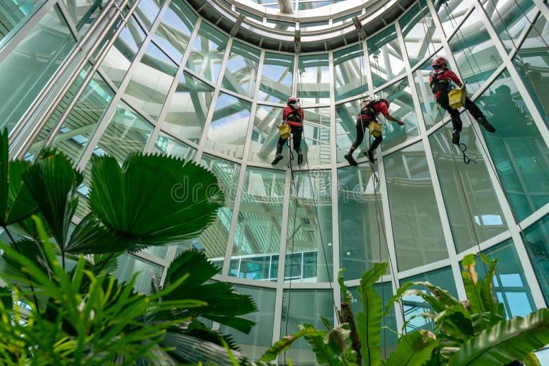 Tres porteros o los servicios de limpieza limpiaban la ventana localizada en la altura de un edificio usando el equipo de segurid fotos de archivo libres de regalías