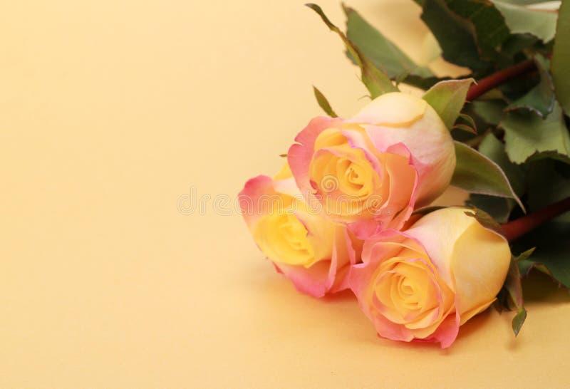 Tres rosas fotografía de archivo libre de regalías