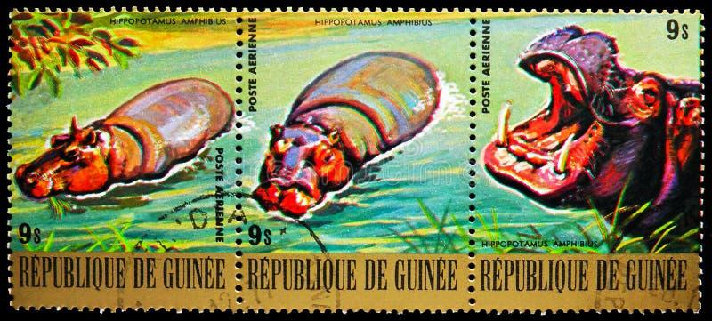 Tres sellos postales impresos en Guinea muestran Hippopotamus (Hippopótamo amphibius), Endangered Animals serie, alrededor de 197 fotografía de archivo libre de regalías