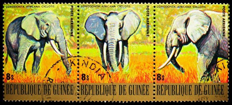 Tres sellos postales impresos en Guinea muestran la serie African Elephant (Loxodonta africana), Endangered Animals, alrededor de imagenes de archivo