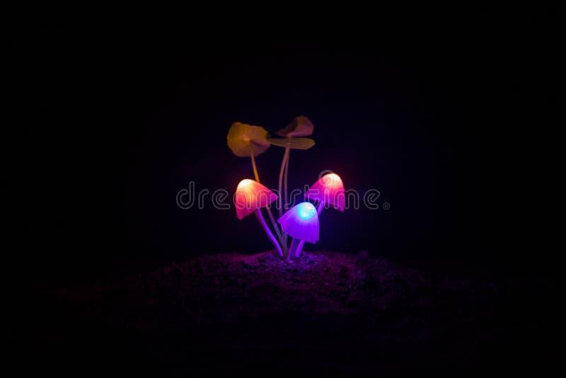 Tres setas que brillan intensamente de la fantasía en primer oscuro del bosque del misterio El tiro macro hermoso de la seta mági imágenes de archivo libres de regalías