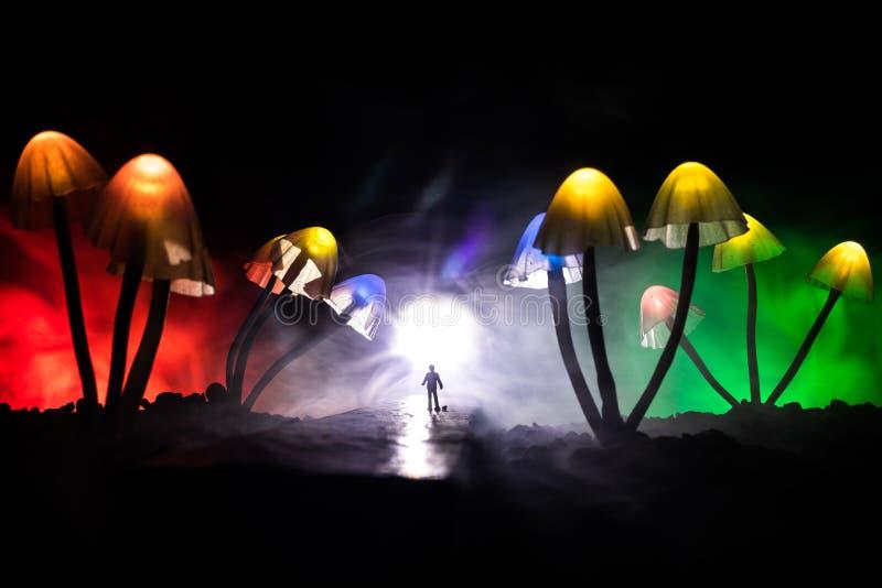 Tres setas que brillan intensamente de la fantas?a en primer oscuro del bosque del misterio El tiro macro hermoso de la seta m?gi foto de archivo libre de regalías