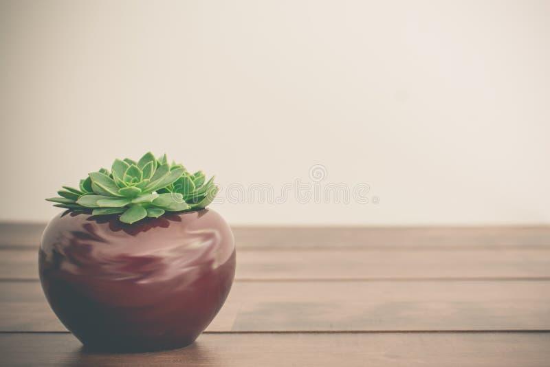 Tres succulents minúsculos imagen de archivo