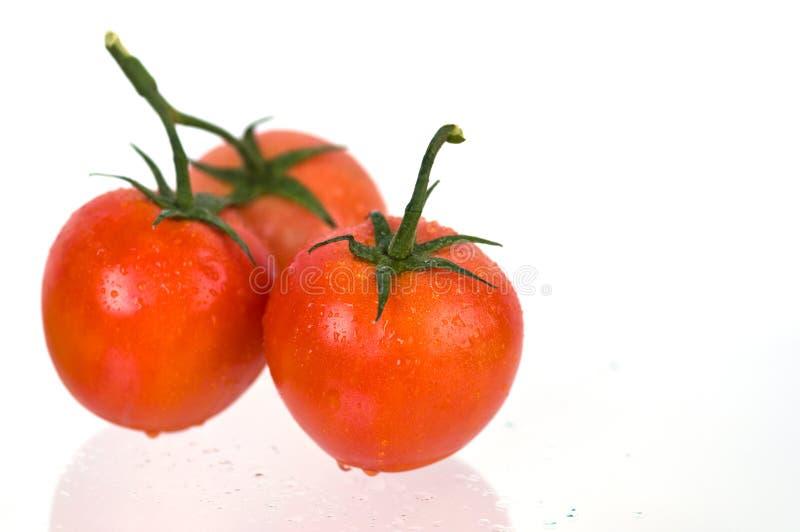 Tres tomates en blanco fotos de archivo libres de regalías