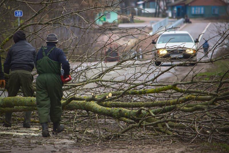 Tres trabajadores están cogiendo un árbol caido del camino foto de archivo libre de regalías
