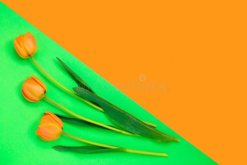 Tres tulipanes anaranjados en fondo en colores pastel de los colores creativos Copie el espacio Día para mujer del concepto mínim imagen de archivo