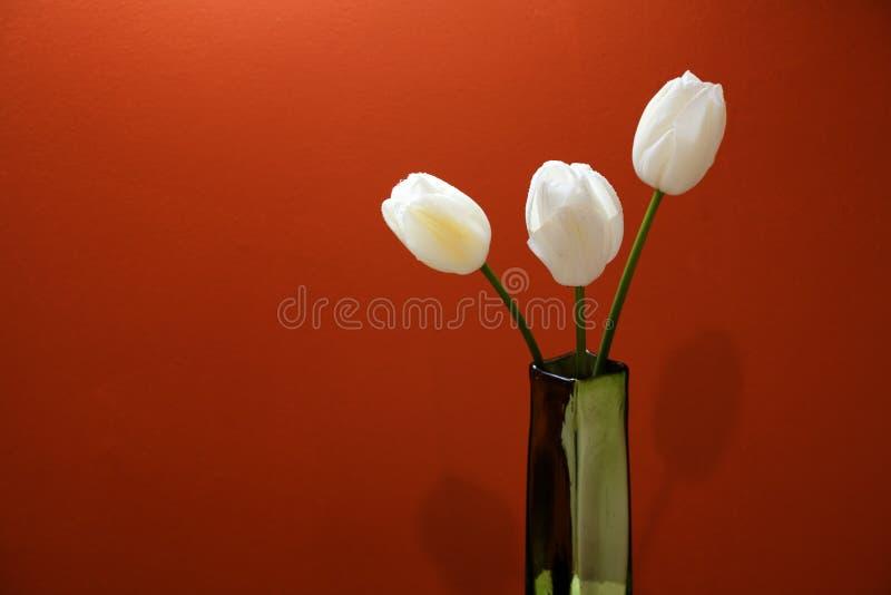 Tres tulipanes blancos fotografía de archivo