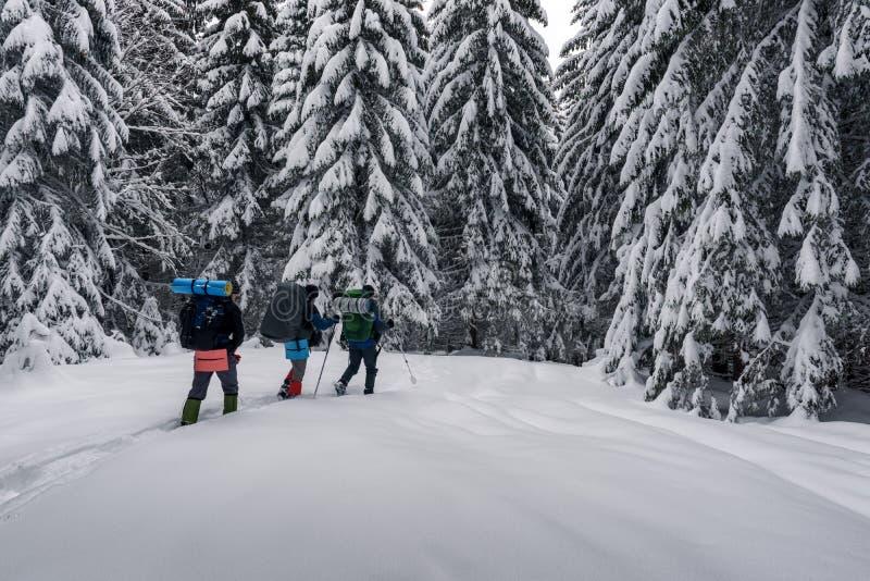Tres turistas con mochilas en el bosque nevoso fotografía de archivo libre de regalías