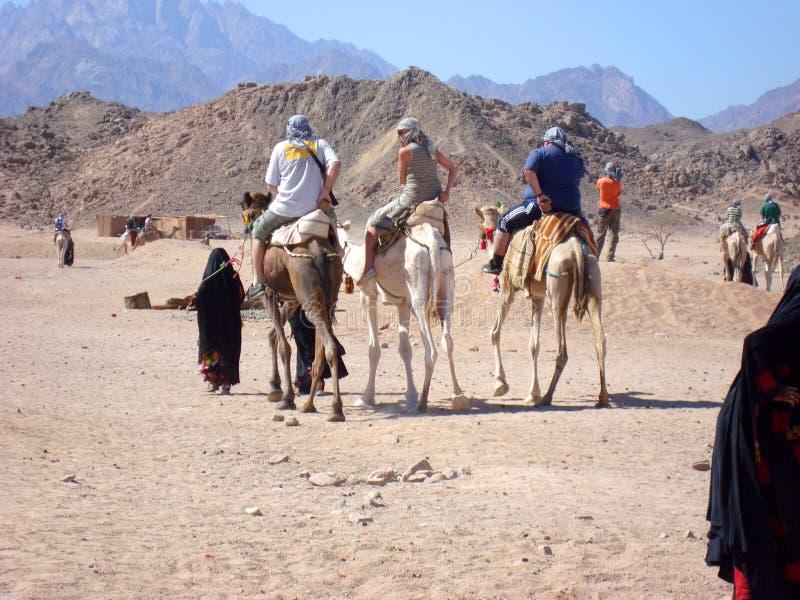 Tres turistas montan en los camellos acompa?ados por una gu?a fotografía de archivo libre de regalías