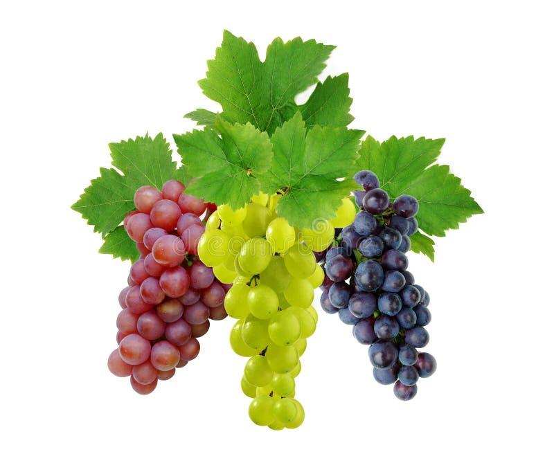 Tres uvas con las hojas