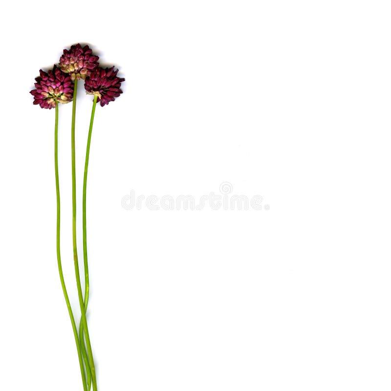 Tres wildflowers imagen de archivo