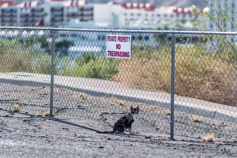 Trespassing кот стоковое фото