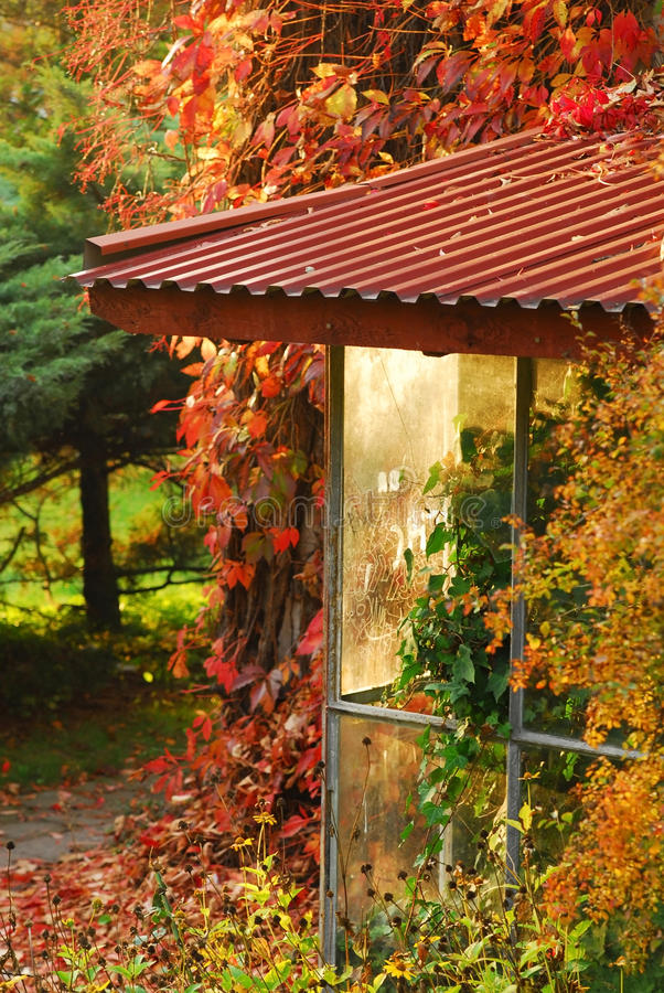 Tress del otoño imágenes de archivo libres de regalías