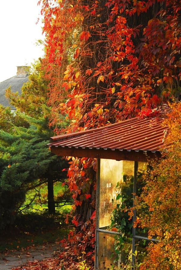 Tress del otoño foto de archivo libre de regalías