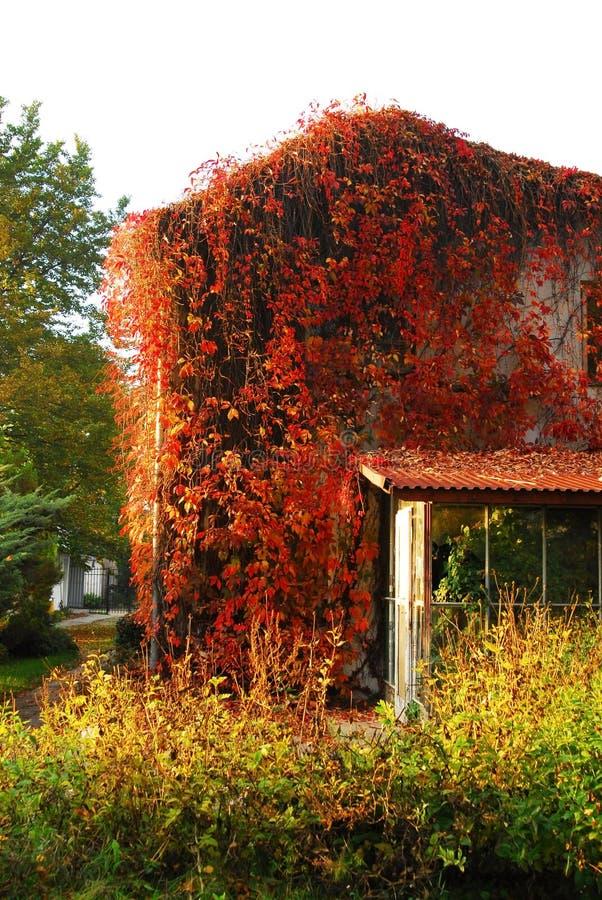 Tress del otoño fotos de archivo libres de regalías