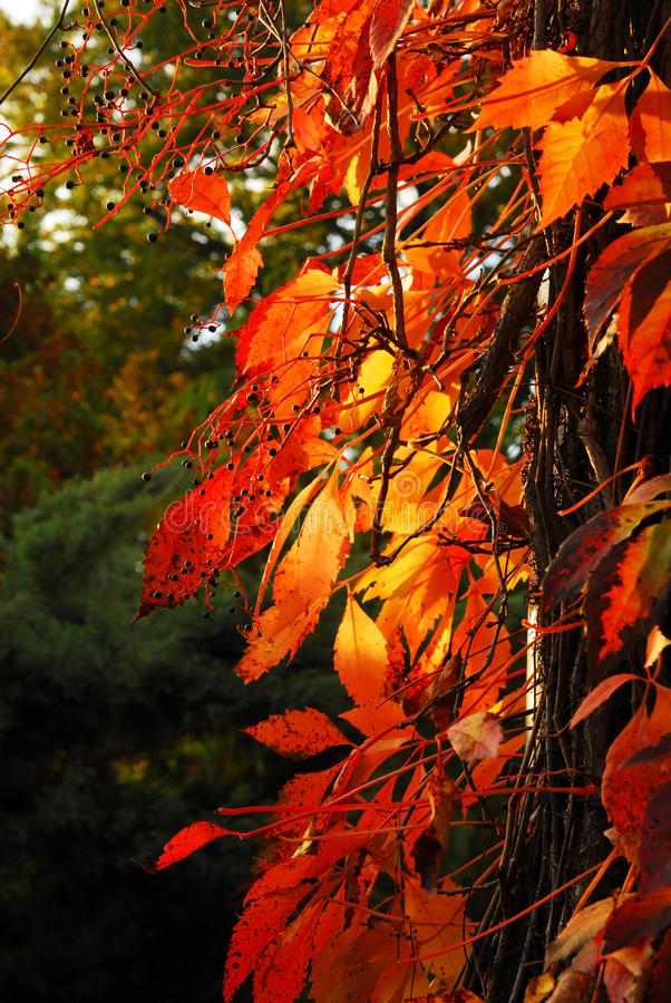 Tress del otoño foto de archivo