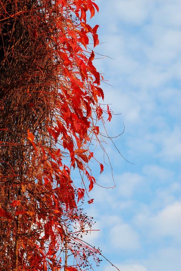 Tress del otoño fotografía de archivo