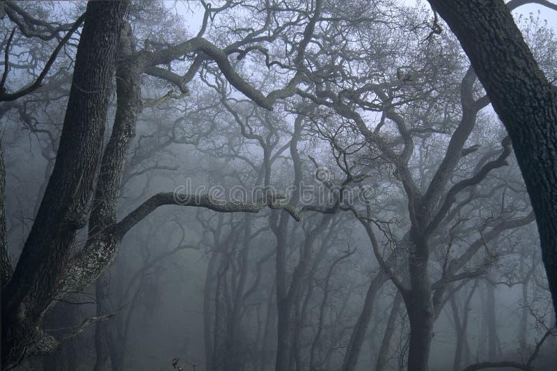 Tress en niebla fotografía de archivo libre de regalías
