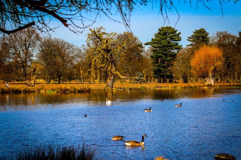 Tress by the lake. Beautiful English lake with amazing tress around it royalty free stock image