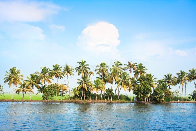 Tress a lo largo de los remansos, la India del coco. foto de archivo libre de regalías