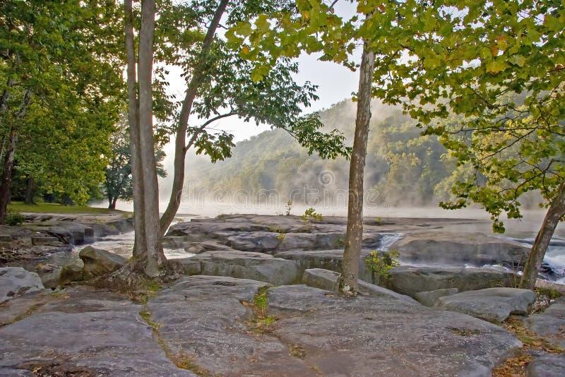 Árboles crecidos en rocas fotos de archivo libres de regalías