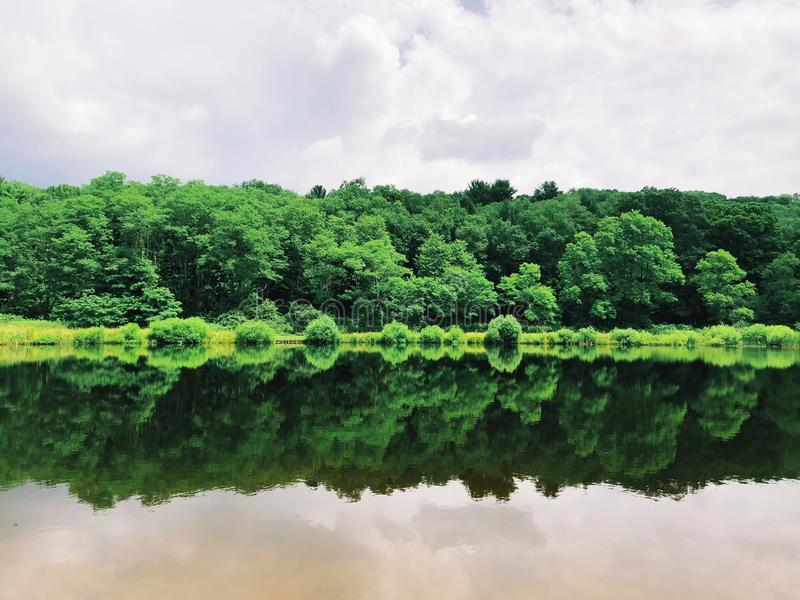 Tress reflection on the water. Tress reflection on a pond inside Sunnybrook State Park in New England Torrington Litchfield Connecticut United States stock image
