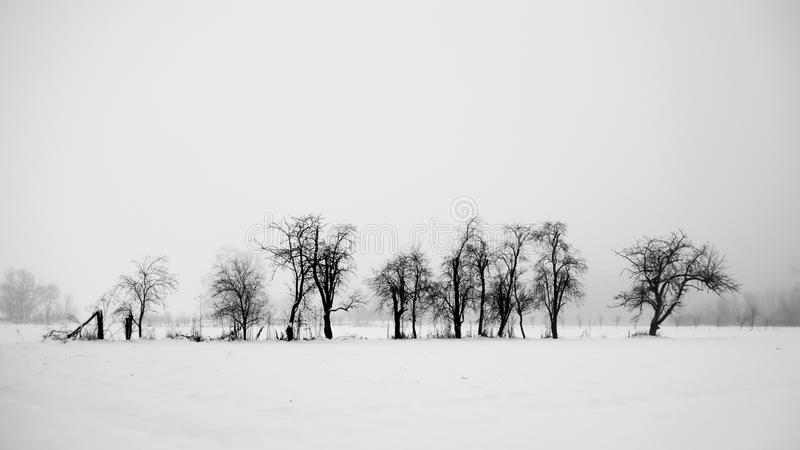 Tress and snow. Winter landscape. Black and white stock images