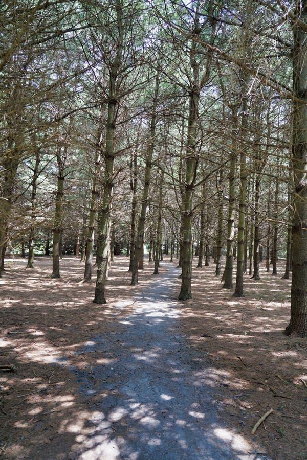 Tress. Woids, woods, lost, path, magic royalty free stock photo