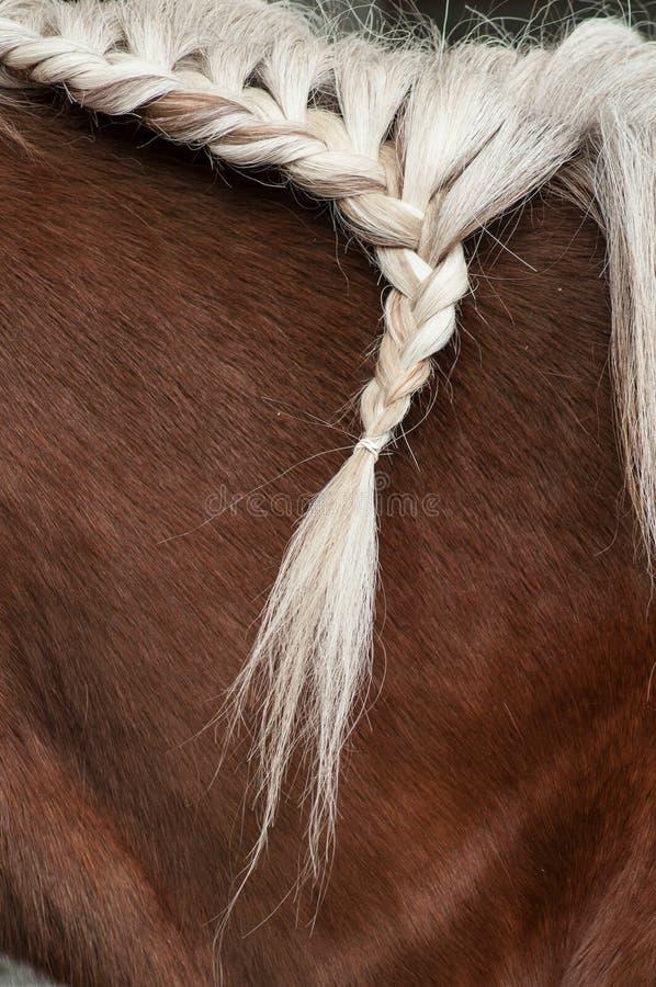 Tresse avec les poils de la crinière d'un cheval photographie stock libre de droits