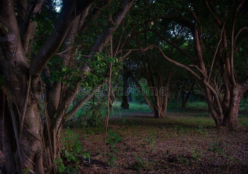 Tresse dans le village d'Amani photos stock