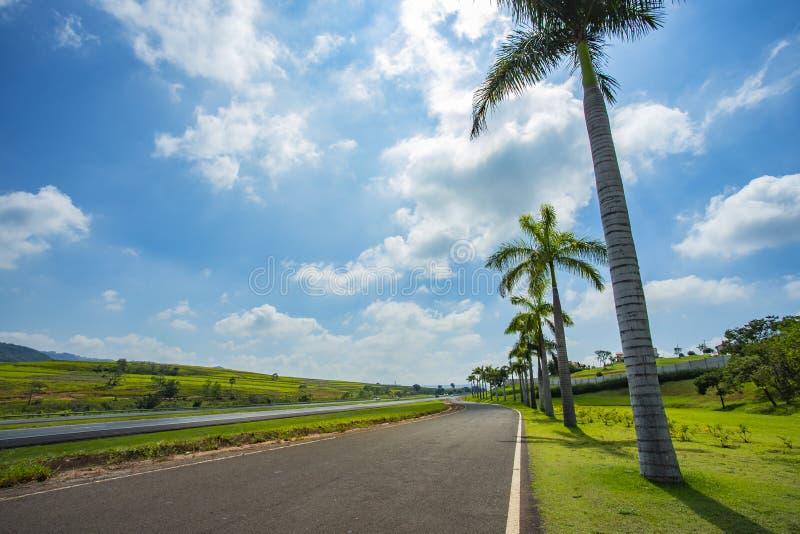 Trevlig asfaltväg med palmträd mot blå himmel och molnet arkivfoton