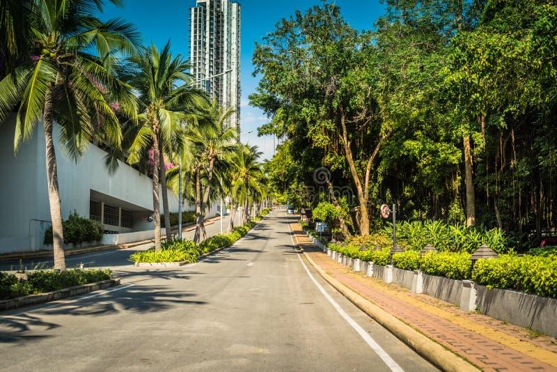 Trevlig asfaltv?g med palmtr?d mot den bl?a himlen och molnet fotografering för bildbyråer
