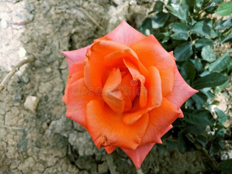 Trevlig blomma royaltyfria bilder