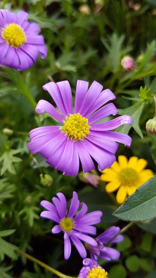 Trevlig blomma arkivfoto