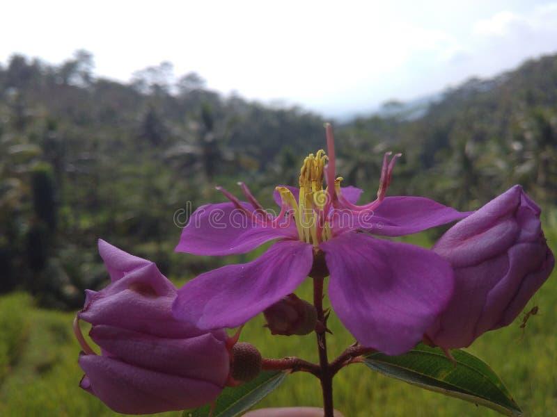 Trevlig blomma i naturen royaltyfri fotografi