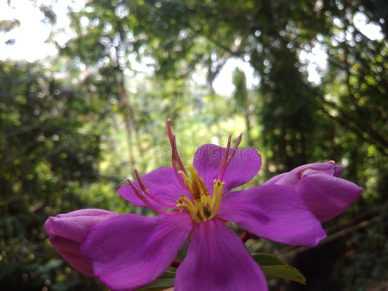 Trevlig blomma i naturen royaltyfria foton