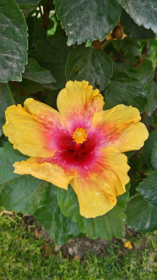 Trevlig blomma mycket av färger arkivbild