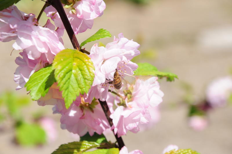 Trevlig blomma och ett bi arkivbilder