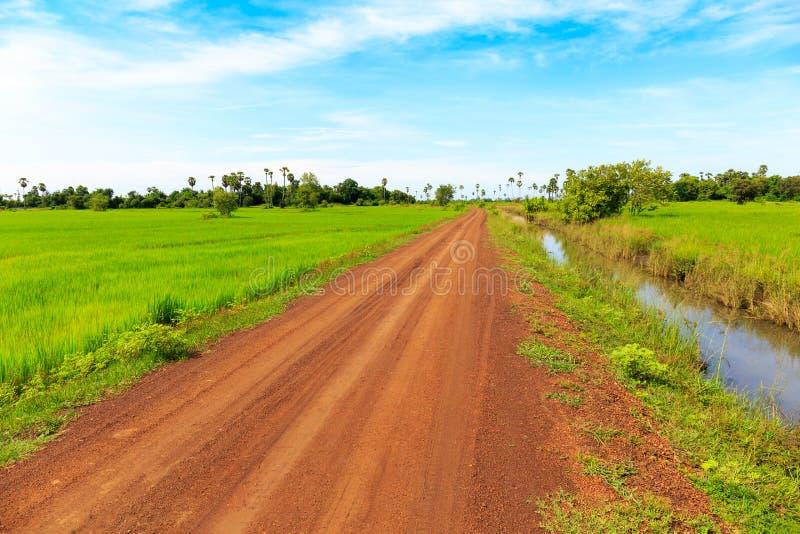 Trevlig grusväg till och med gröna Paddy Field under blå himmel arkivfoto
