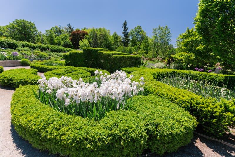 Trevlig härlig sikt av botaniska trädgården med vita fluffiga blommor, landskap arkivbilder
