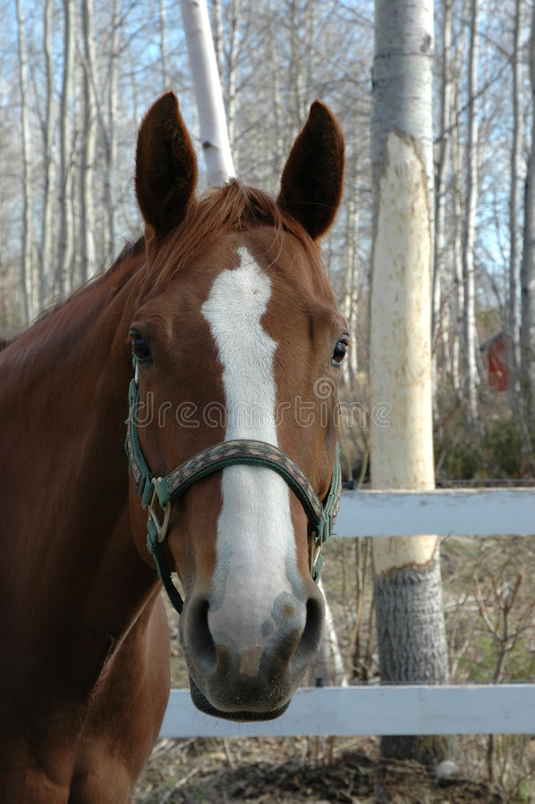 trevlig head häst arkivbild