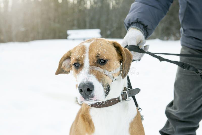 Trevlig hund på en koppel i snön royaltyfri foto