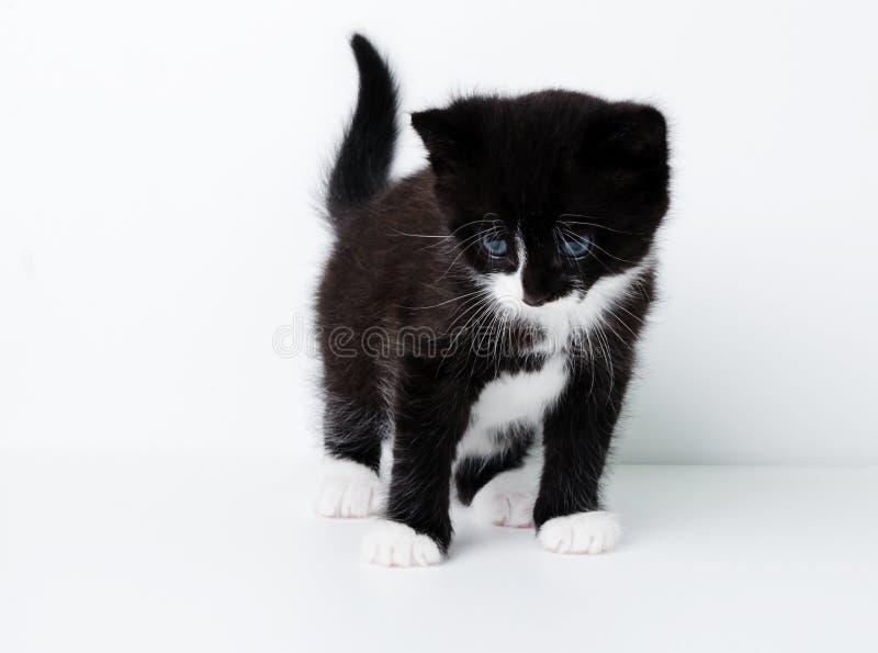 Trevlig kattunge