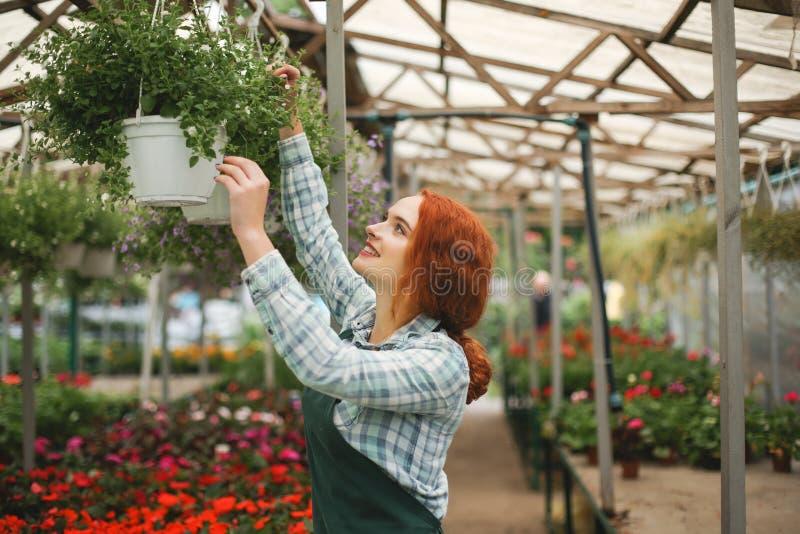 Trevlig le blomsterhandlare i förklädet som arbetar med blommor Anseende för ung dam med blommor och lyckligt se åt sidan arkivfoto