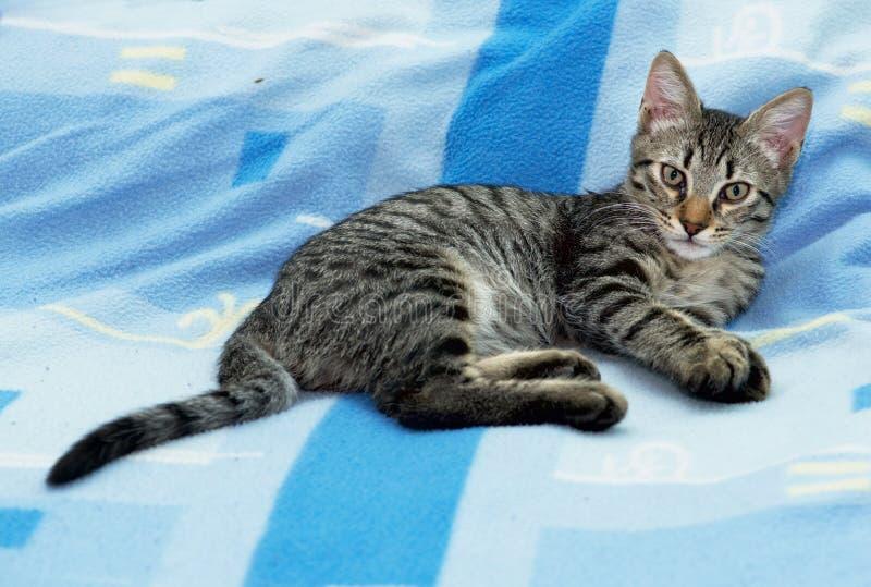 Trevlig liten 3 månad kattunge som kopplar av på en säng och ser rak till kameran royaltyfria foton