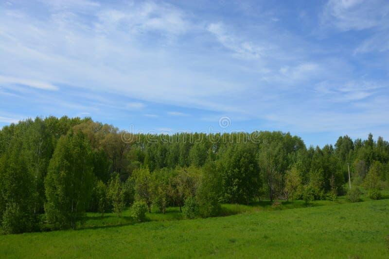 Trevlig natur och träd nära Rybinsk royaltyfria bilder