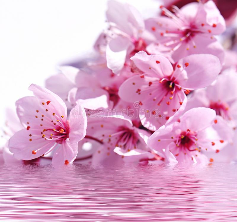 Trevlig ordning med rosa orkidér i vattnet, wellnessen och skönheten arkivfoton